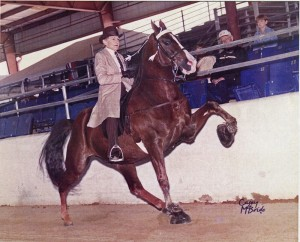 Dorothy and Cruiser competed at many national horse shows and won more often than they lost. In this photo, Dorothy is in her upper 80s, Cruiser in his mid 20s. Photo provided by Dorothy Domanski