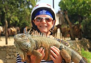 A40-PIC-3-near-far-Jeannette-iguana