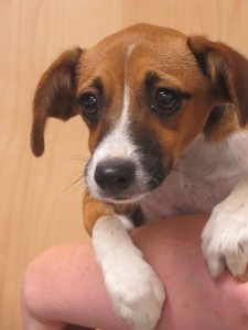 A90-PIC-1-Adopt-a-Pet