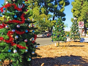 All the spots for median trees were reserved this year and the decorated trees were being installed this week. The lights on these trees and in the other common areas will be turned on this Sunday, December 6, in conjunction with the Tree-Lighting Festival at the Lodge. Photo by Donna Kupke