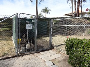 The Operations Department has three border collies that help scare coots away from the Golf Course. They're boarded at the Operations Yard Kennel, next to the North Gate. Stray dogs are kept in a separate enclosure until owners or animal control can get them