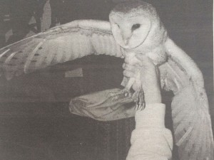 In March 1996, Sandy Healy, with the help LEAF officer Jean Voshall, rescued this barn owl from Sandy's nine-inch diameter chimney flue.