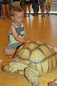 PIC-FD-359-reptile-tortoise-boy-DK-copy
