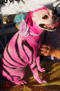 Bring costumed pets to the Pet Parade and Costume Contest this Sunday, October 9, at noon.  Photo by Donna Kupke
